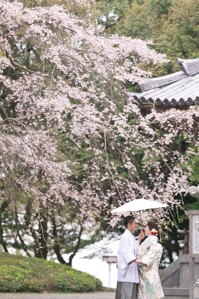 和装前撮り 奥之院の桜の木